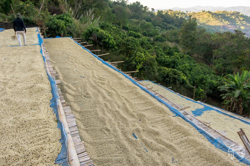 Bamboo Racks for Drying Coffee in Thailand
