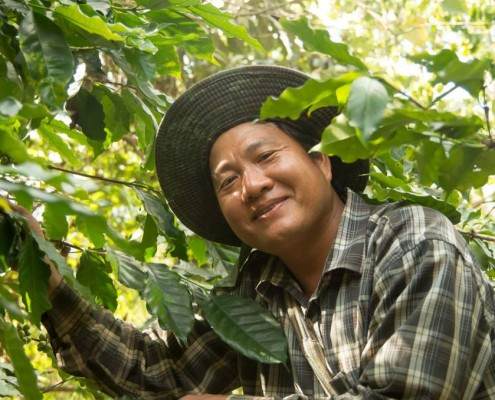 Coffee farmer in Thailand