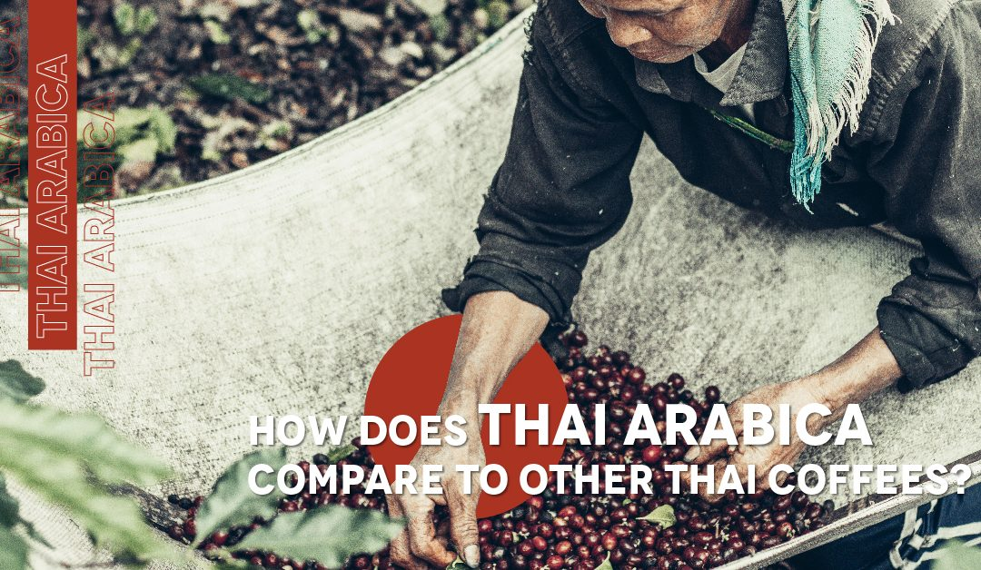 Thai Arabica vs. Robusta: What's the Difference?